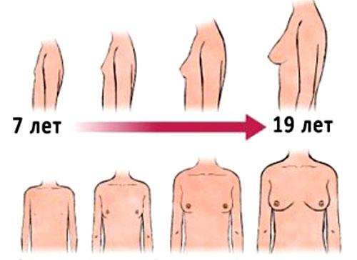 Могут ли рости грудь от секса